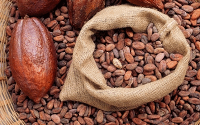 پودر کاکائو اندونزی ارزان